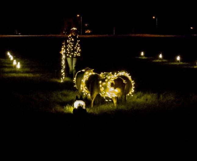 Sheeplighting